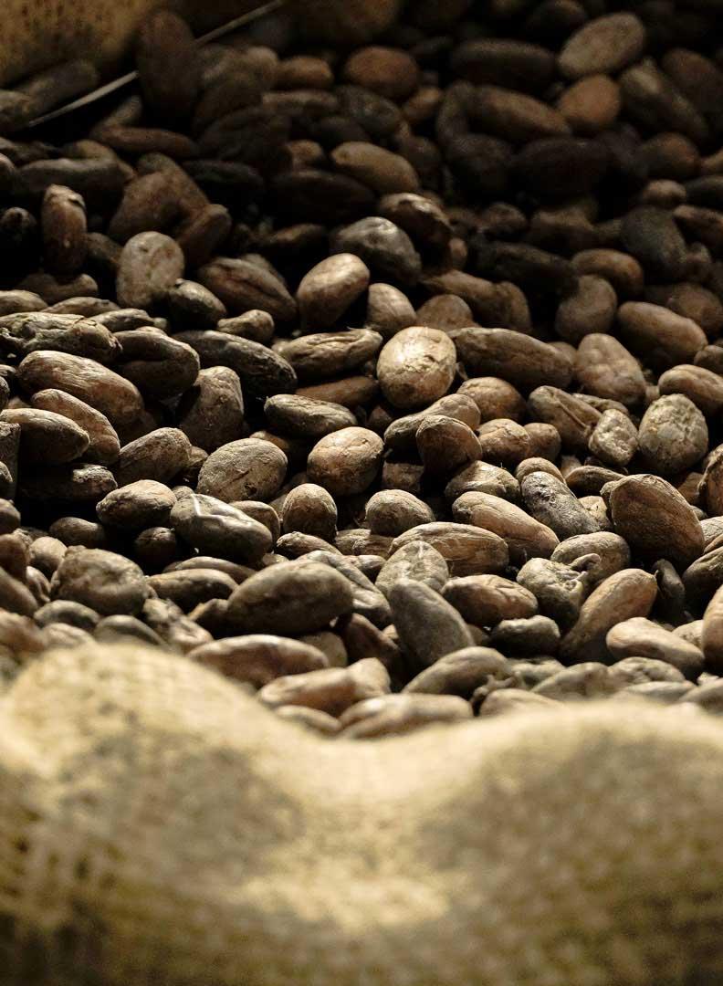 Chocolates by Cenu Cacao Home, Creative, Artisan Chocolate, Corporate